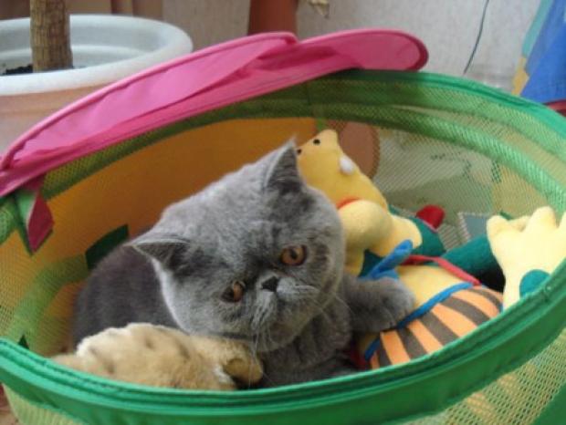 наш кот кентоша 6 месяцев