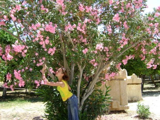 Нехай у серці твоєму розквітнуть сьогодні сади,  Тому що моє Кохання назавжди- це Ти.. Закохуйтесь, прийшла пора..