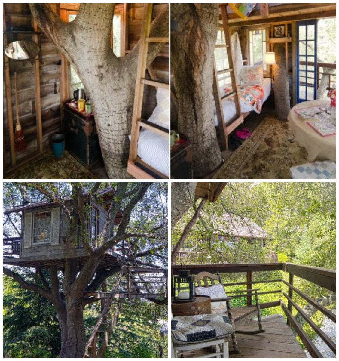 Можно ли жить на дереве: 3 дома-гнезда - фото №3