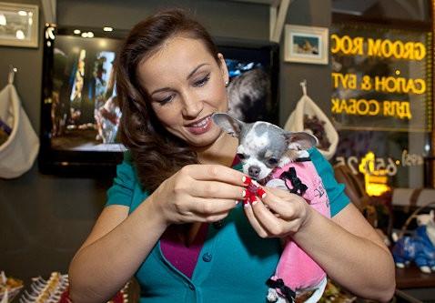 Утрата в семье Анфисы Чеховой: телеведущая скорбит по любимой собаке - фото №1
