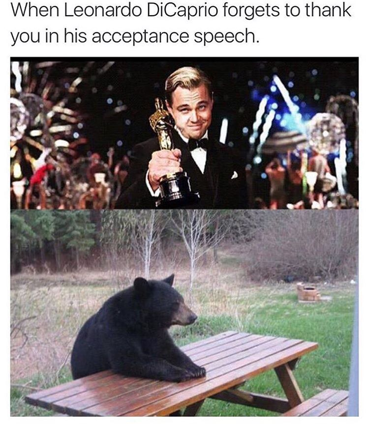 картинка медведь с оскаром