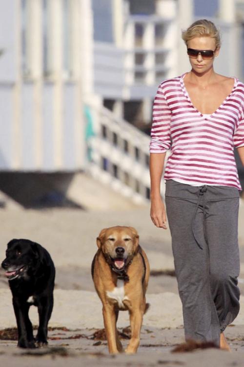 Модные собаки звезд. Фото - фото №10