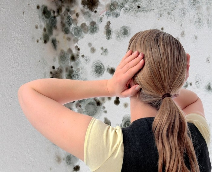 Как бороться с плесенью в доме - фото №1