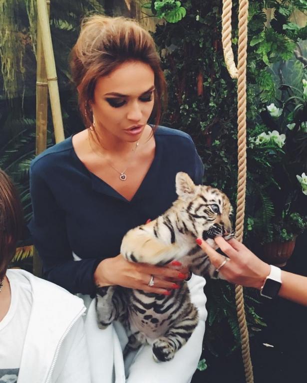 водонаеву покуса тигр