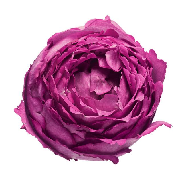 Дом Piaget празднует первый «День розы Пьяже» - фото №2
