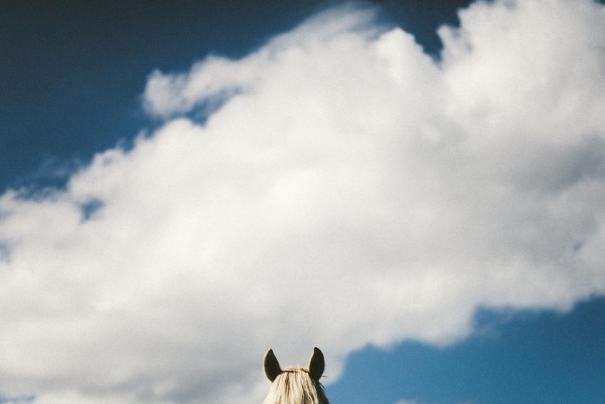 цирк без животных  дикая природа лошадь
