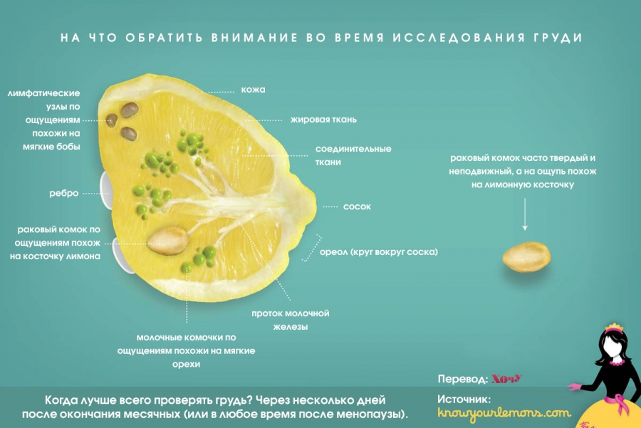 Как научиться исследовать грудь и уметь вовремя распознавать рак: подсказка на примере лимонов - фото №2