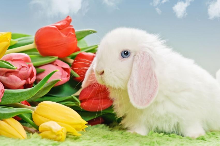 easter rabbit pictures обои на рабочий стол пасхальный кролик