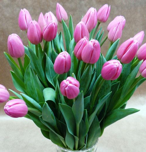 Как признаться в любви с помощью цветов? - фото №1