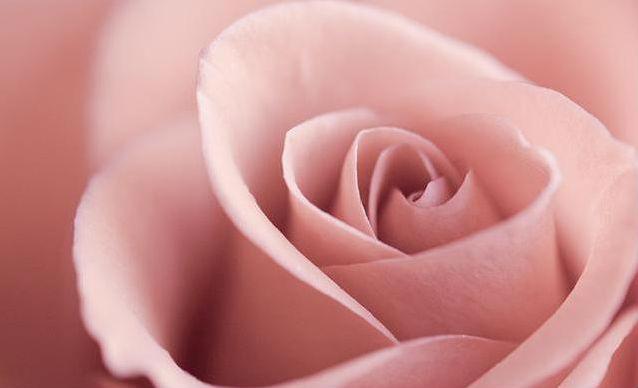 Розовые тени: особенности нанесения - фото №1