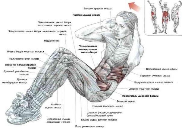 Доброе утро: утренняя зарядка для похудения, эффективные упражнения и лайфхаки (+ВИДЕО) - фото №5