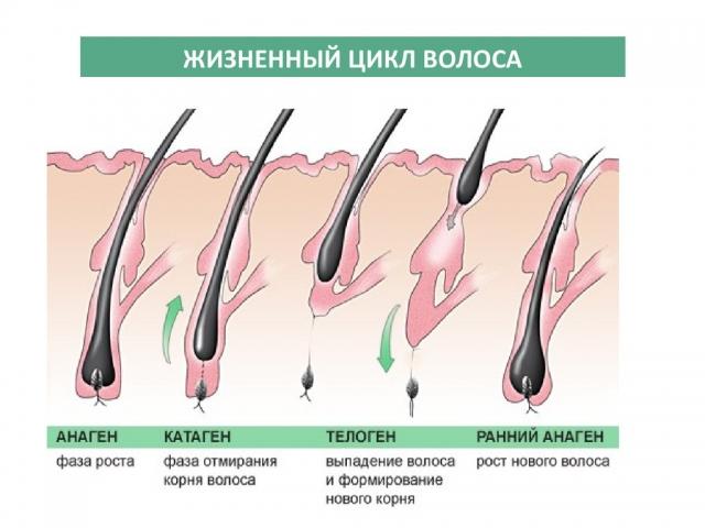 Касторовое масло для ресниц: как отрастить длинные ресницы, рецепты с касторовым маслом (+ВИДЕО) - фото №1