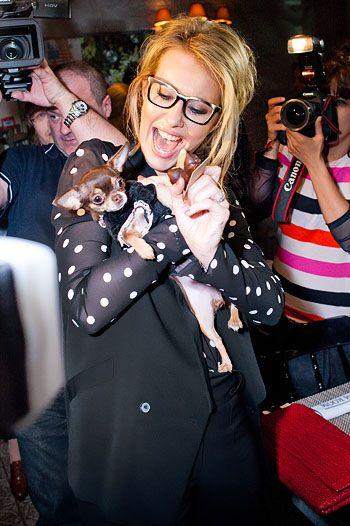 Модные собаки звезд. Фото - фото №5