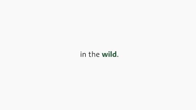 Lacoste поменяли фирменный логотип на изображения исчезающих животных - фото №2