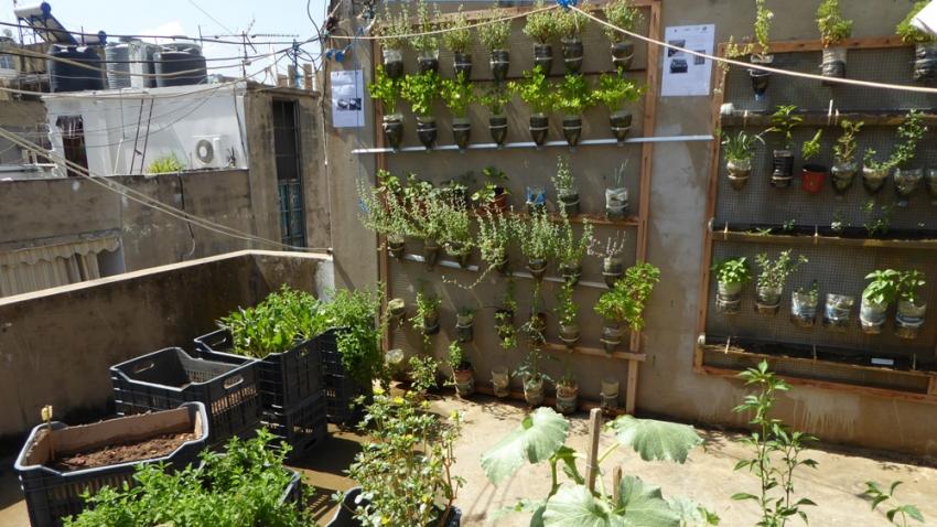 огород дома