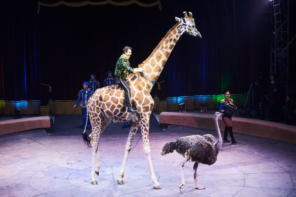 премьера цирк киев
