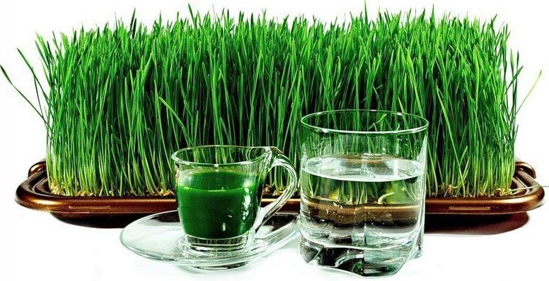 Пророщенная пшеница: как вырастить и употреблять - фото №1