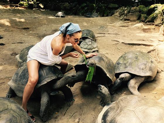 Лобода с черепахами