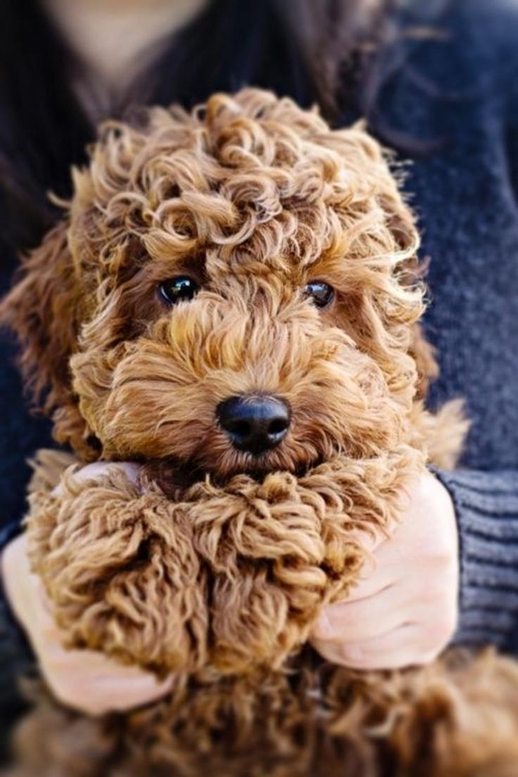Как правильно выбрать собаку и действительно ли она нужна тебе? - фото №11