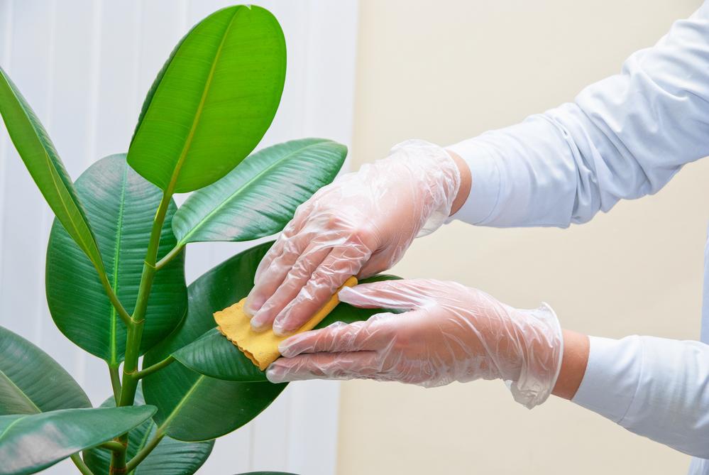 Дышать станет легче: кислородные растения, которые должны быть в доме - фото №4