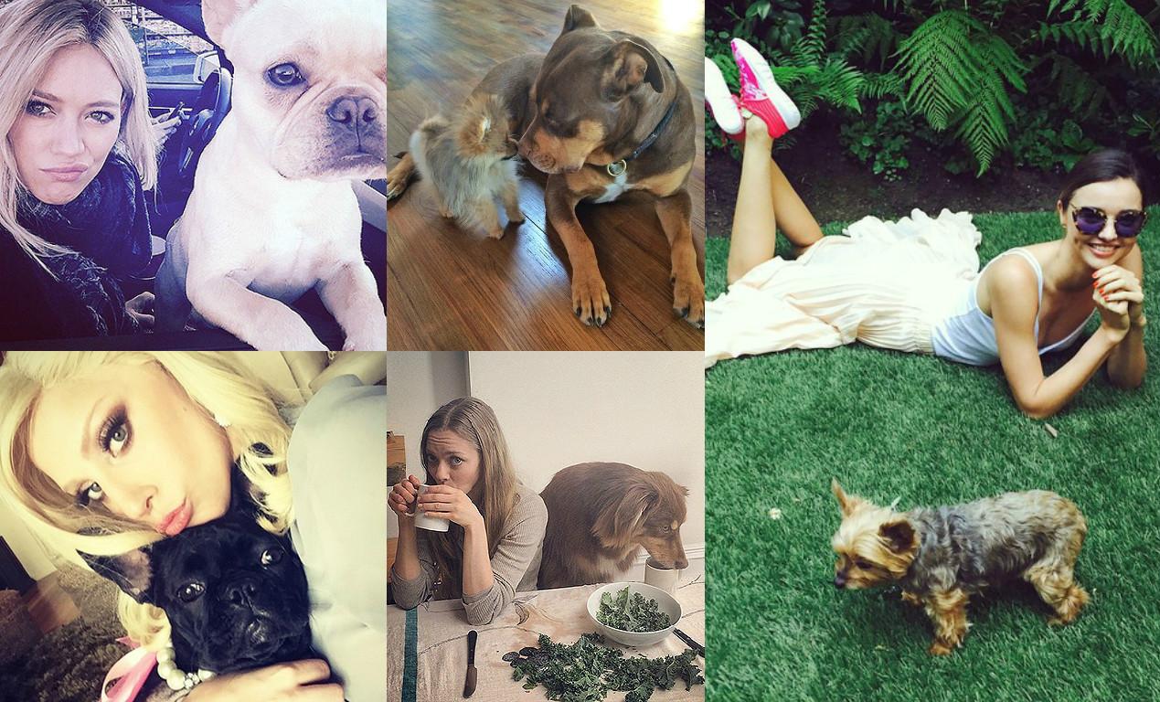 День собак в США: звезды и их питомцы - фото №1