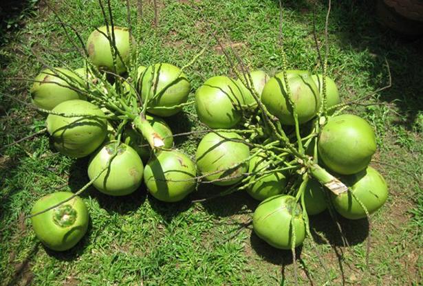 Можно ли похудеть на кокосовой воде - фото №2