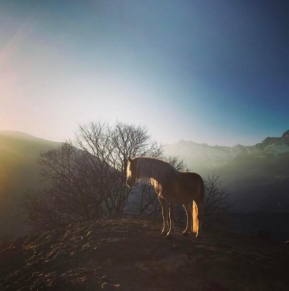 Ксения Собчак в образе провинциалки пошутила над сходством с лошадью (ФОТО) - фото №1