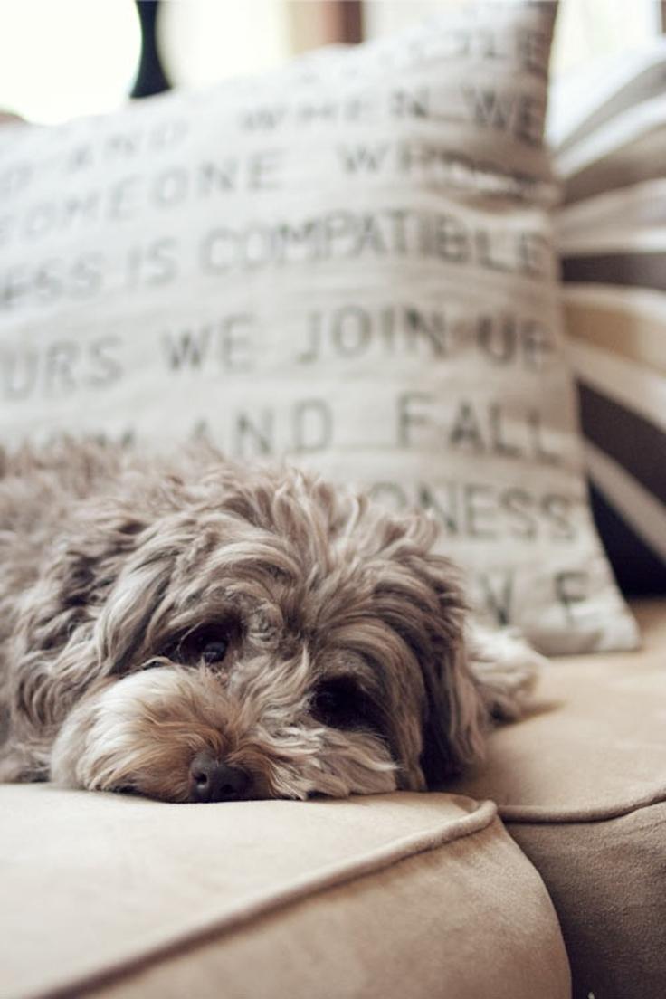 Как правильно выбрать собаку и действительно ли она нужна тебе? - фото №12