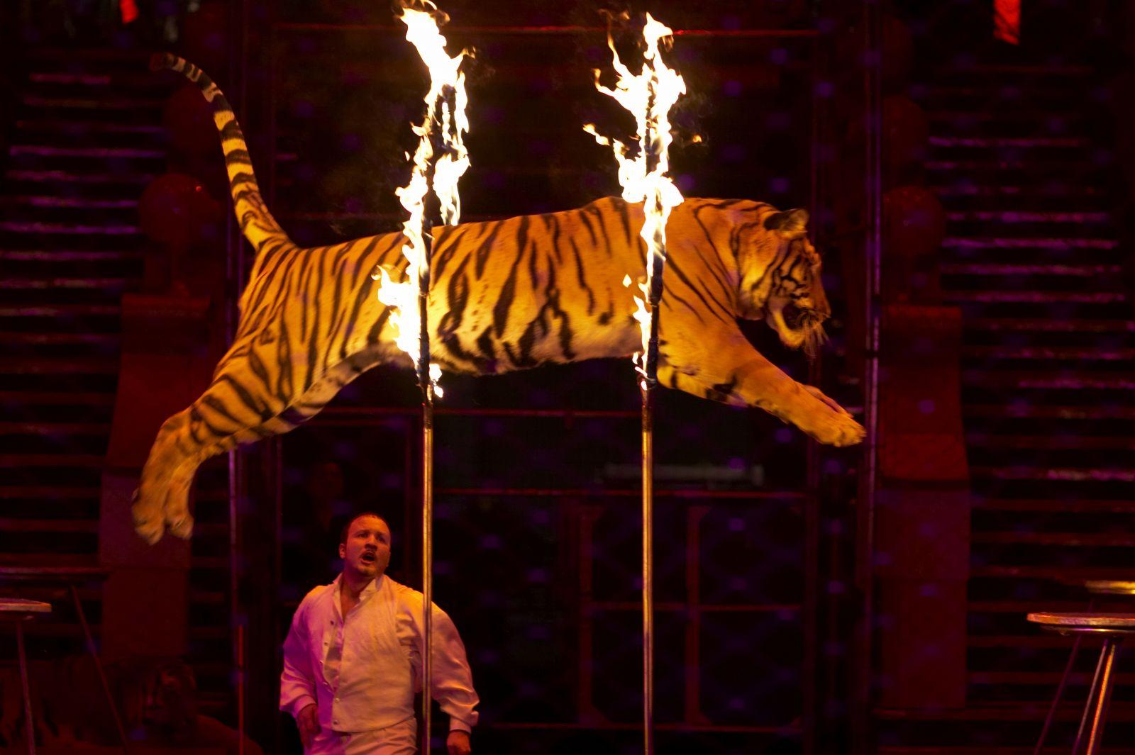 Украинцев призывают отказаться от цирков с животными. Петиция - фото №1