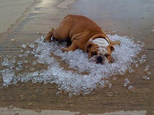 Как помочь домашним питомцам пережить жару в городе - фото №1