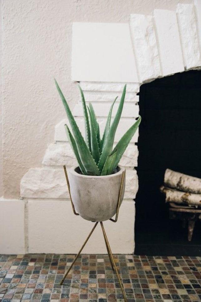 Как использовать алоэ вера: 8 ситуаций, когда это комнатное растение выручит - фото №8