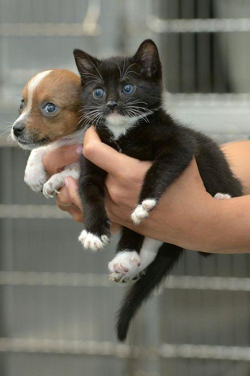 На Трухановом острове пройдет тренировка в пользу приюта для животных