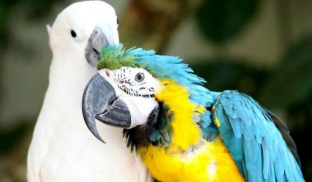 Как научить попугая разговаривать - фото №2