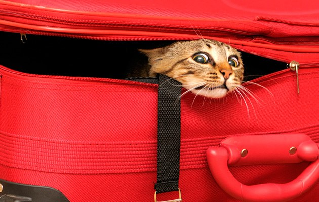 Все, что ты должна знать о путешествии с домашним питомцем - фото №1