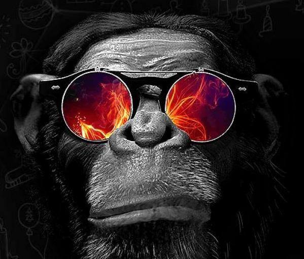 digital monkey в киеве