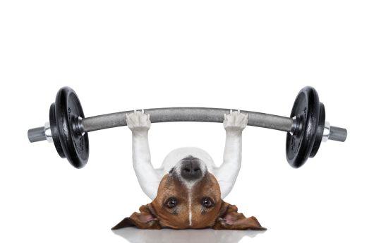 Как правильно тренировать собаку - фото №1