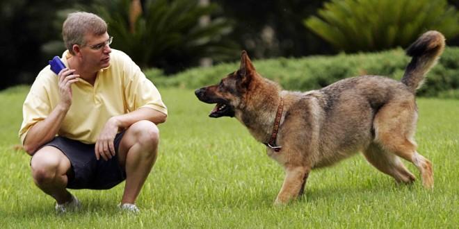 Как выбрать хорошего тренера для собаки - фото №1