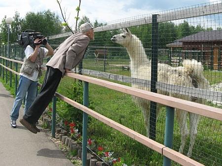 Дроздов пригласил пингвинов в Кремль - фото №1
