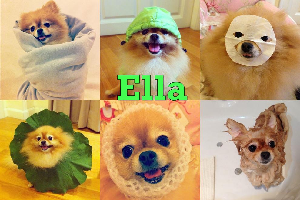 Самые забавные животные из Instagram - фото №13