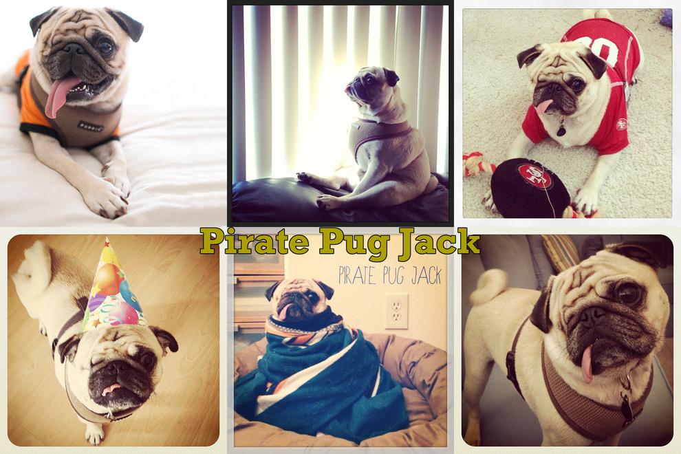 Самые забавные животные из Instagram - фото №15