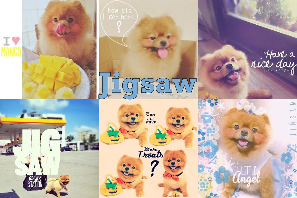 Самые забавные животные из Instagram - фото №17