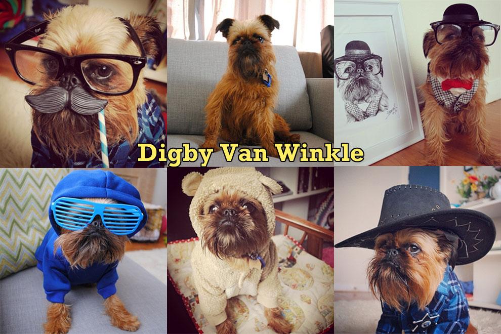 Самые забавные животные из Instagram - фото №4