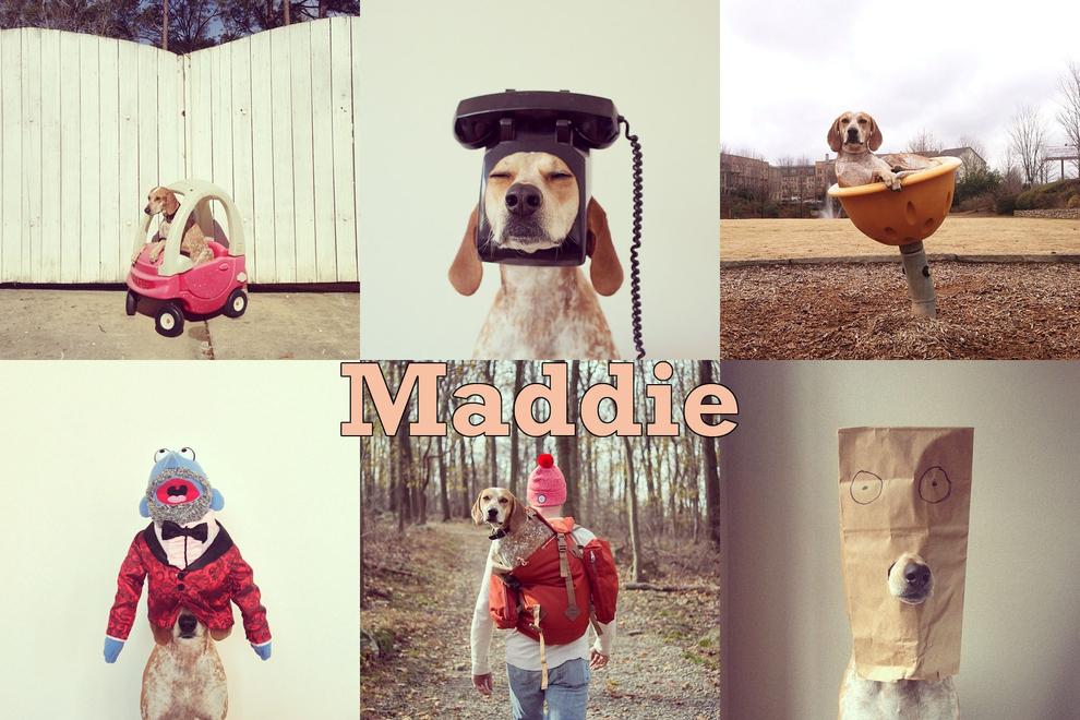 Самые забавные животные из Instagram - фото №20