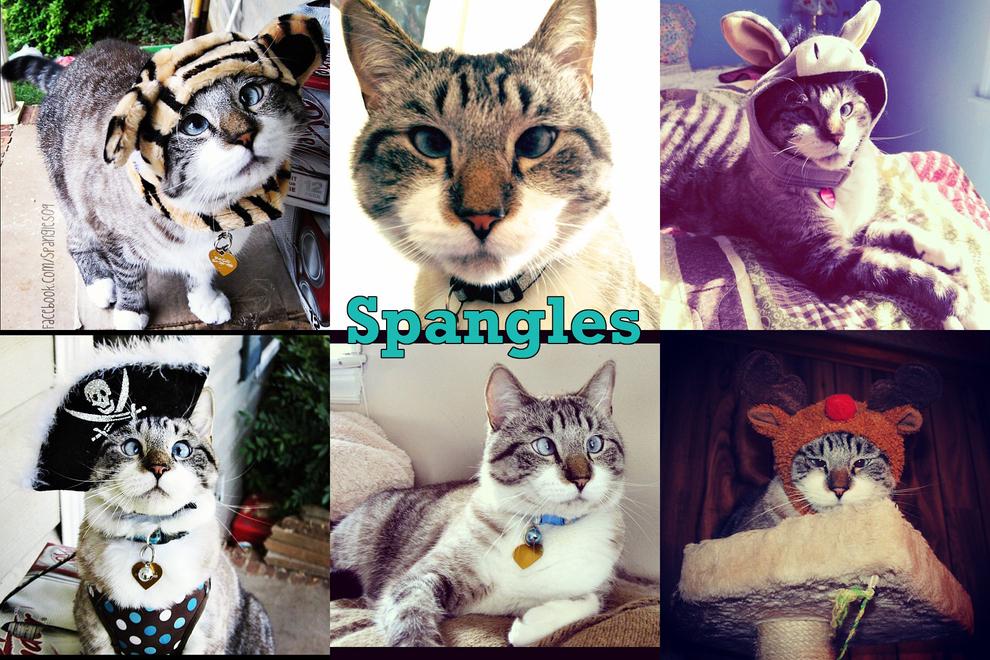 Самые забавные животные из Instagram - фото №5