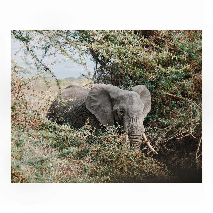цирк без животных  дикая природа