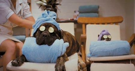 Гостиницы для домашних животных: как выбрать? - фото №3