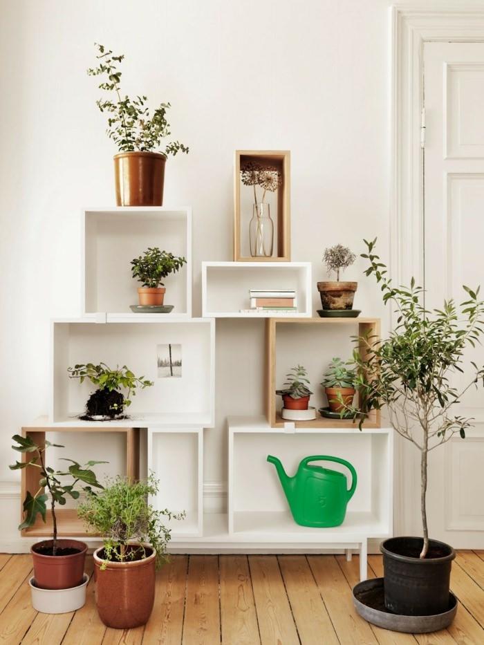 Домашняя оранжерея: выбираем красивые и полезные комнатные растения (очищающие, бактерицидные, увлажняющие) - фото №4
