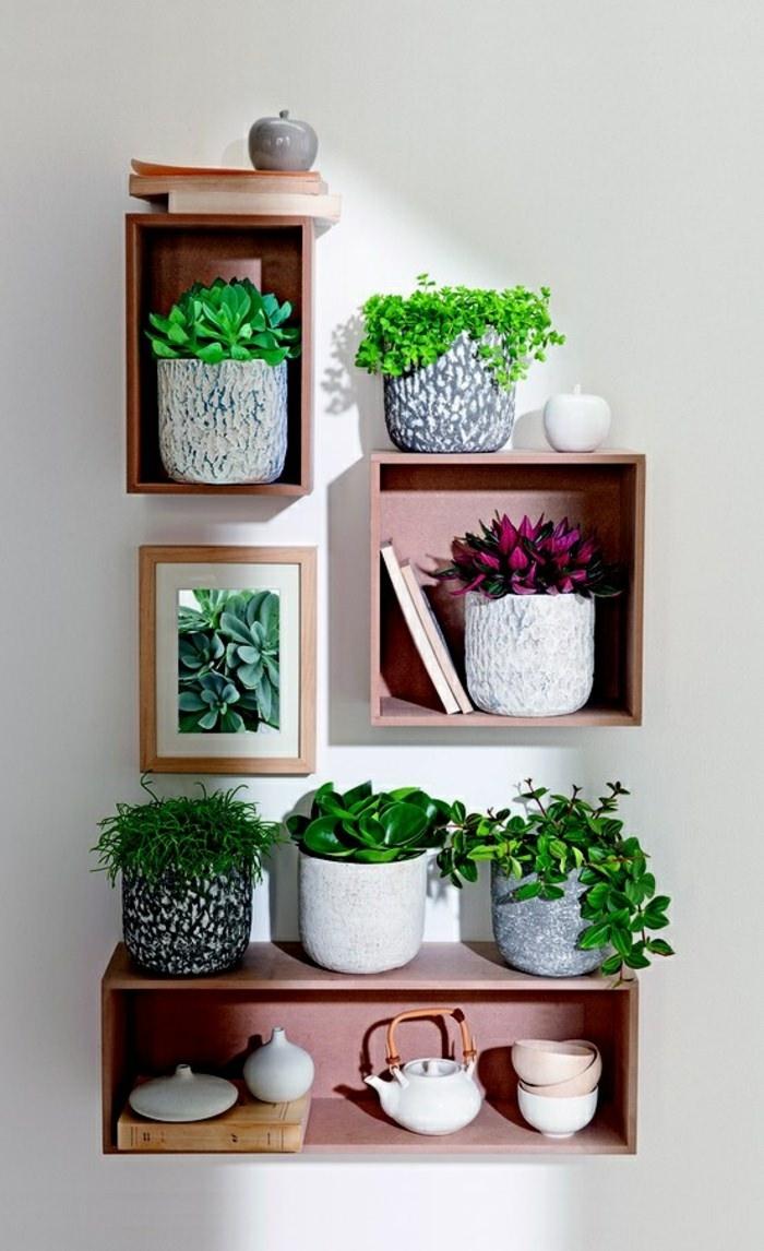 Домашняя оранжерея: выбираем красивые и полезные комнатные растения (очищающие, бактерицидные, увлажняющие) - фото №13