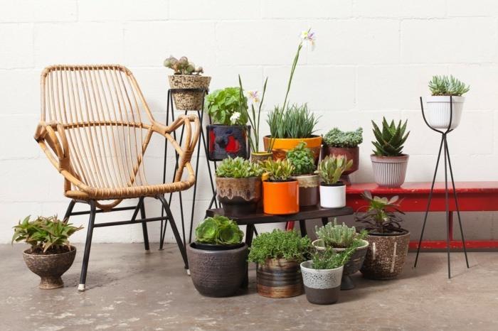 Домашняя оранжерея: выбираем красивые и полезные комнатные растения (очищающие, бактерицидные, увлажняющие) - фото №12