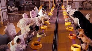 Гостиницы для домашних животных: как выбрать? - фото №2